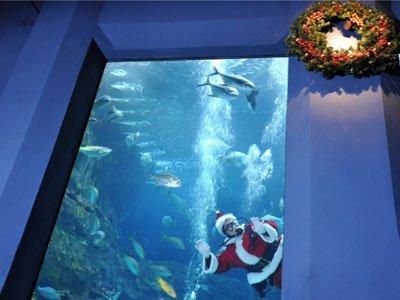 Santa And Elves Bring Holiday Magic To Aquarium