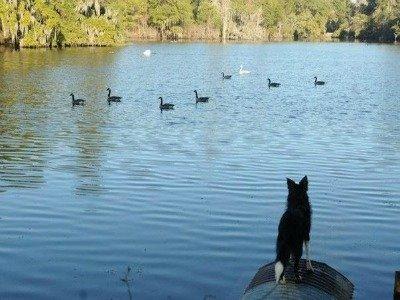 airlie dog.jpg