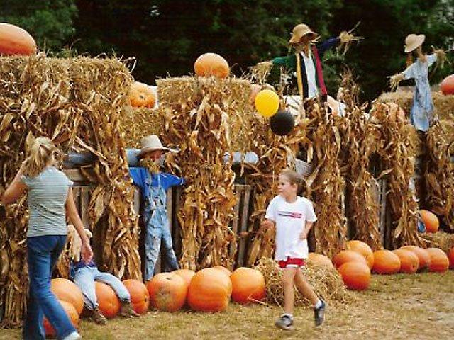 Fall-Indigo-Farms