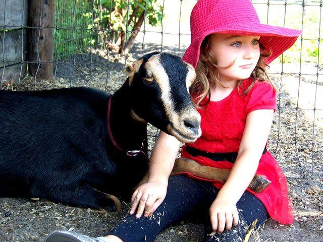 Goat - Be Life Farm