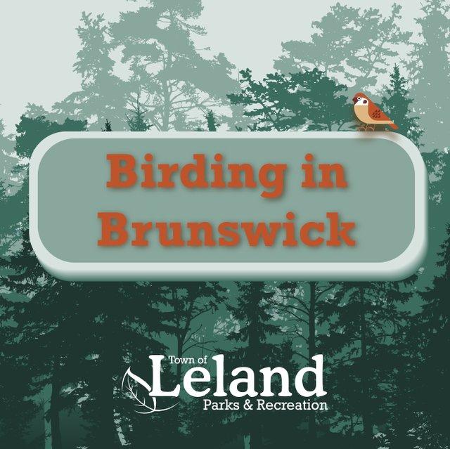 Spring Birding square 1-01.jpg