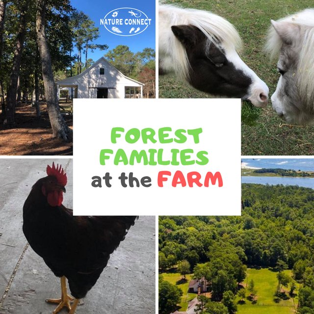 Forest Families at the Farm.png